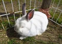 170329ウサギ