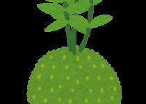 plant_kokedama
