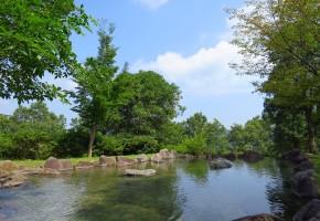 170626コイのすくい取り:じゃぶじゃぶ池