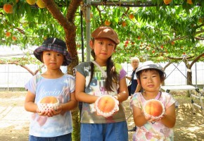 170626真夏のフルーツ収穫体験:モモの収穫体験 (1)