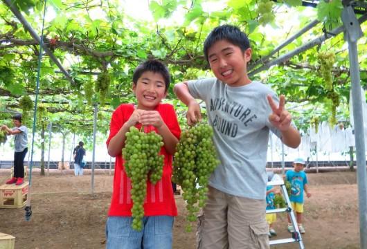 09月・世界一のブドウ!ネヘレスコール収穫体験