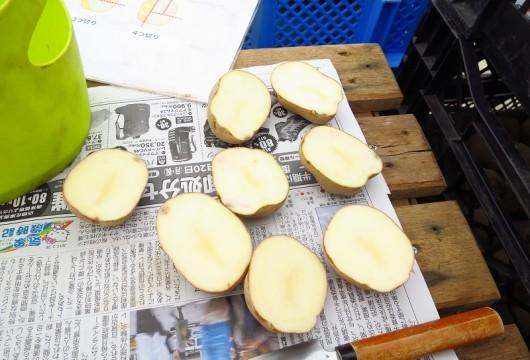 180111ジャガイモの収穫体験